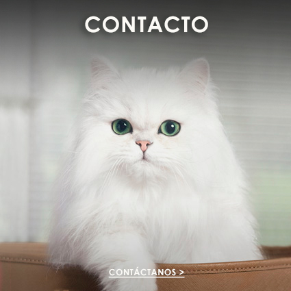 Fancy Feast® contacto