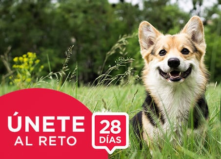 Purina ONE® Únete al reto