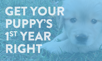 Puppy´s first year