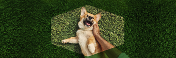 Purina Dog Chow® banner faqs