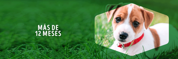 Banner Dog Chow + 12 meses