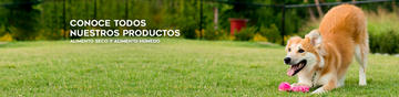 Banner Dog Chow alimento