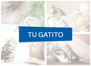Purina Cat Chow momentos