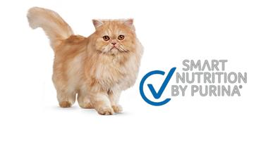 Excellent® Gatos Smart Nutrition