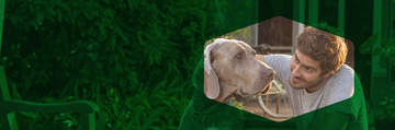 Banner Dog Chow Home 2