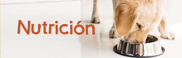 Purina Beneful banner nutricion img