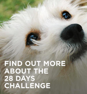 purina-one-cam-28-days-challenge