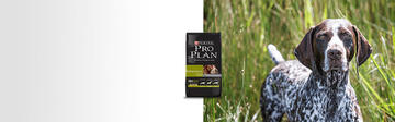 Pro Plan® Performance